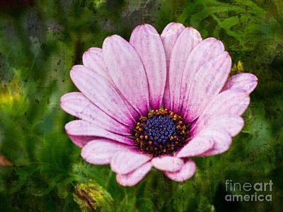 Antique Flower Poster by Lutz Baar