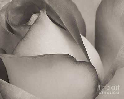 Antique Rose Poster by Sabrina L Ryan