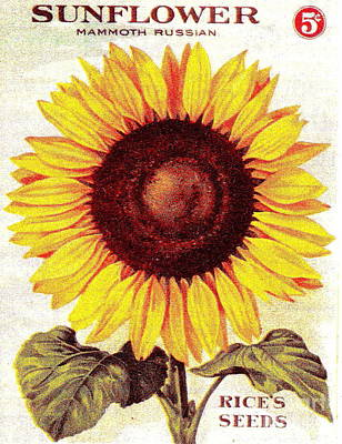 Antique Sunflower Seeds Pack Poster