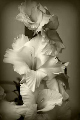 Antiqued Gladiolus Poster by Jeanette C Landstrom