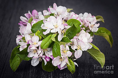 Apple Blossom Bouquet Poster by Elena Elisseeva
