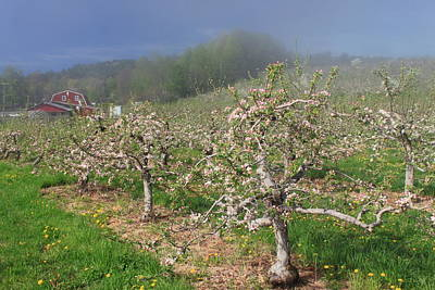 Apple Orchard In Spring Poster by John Burk