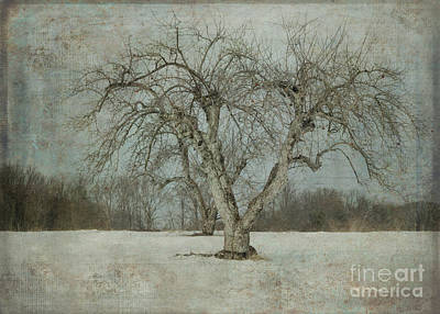 Poster featuring the photograph Apple Tree In Winter by Vicki DeVico
