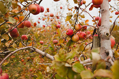 Apple Trees In Fall Poster by Samantha Leonetti