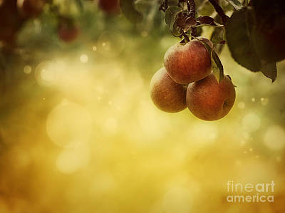 Apples Background Poster by Mythja  Photography