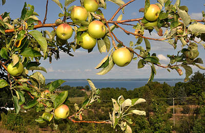 Apples Over Grand Traverse Bay Poster by Diane Lent