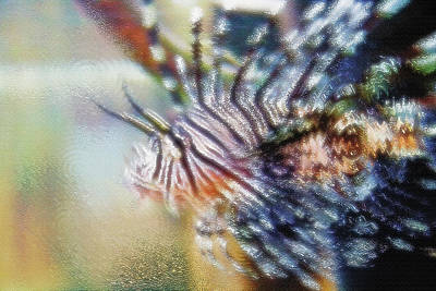 Aquarium Art 12 Poster by Steve Ohlsen