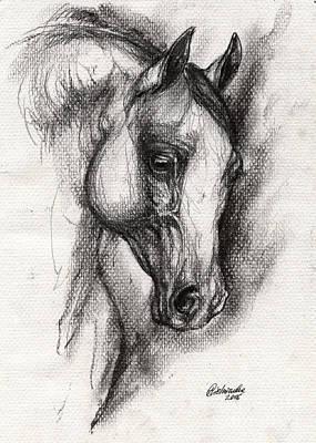 Arabian Horse Drawing 12 Poster
