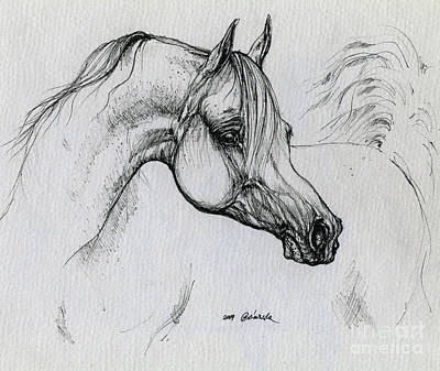 Arabian Horse Drawing 28 Poster