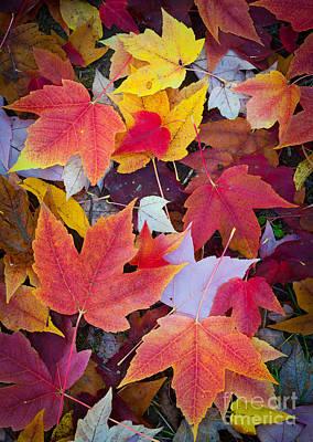 Arboretum Leaves Poster by Inge Johnsson