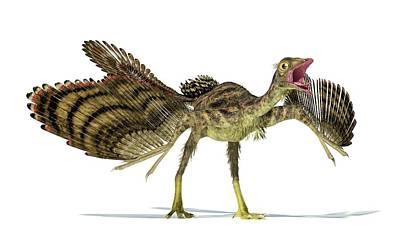 Archaeopteryx Dinosaur Poster by Leonello Calvetti