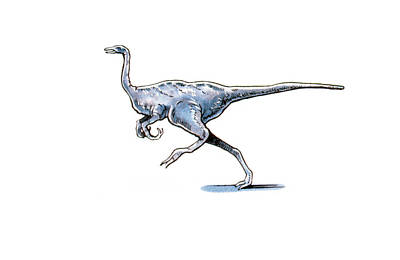 Archaeornithomimus Dinosaur Poster