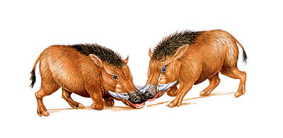Archaeotherium Prehistoric Mammals Poster by Deagostini/uig