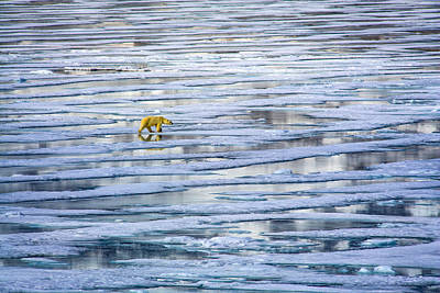 Arctic Journey Poster