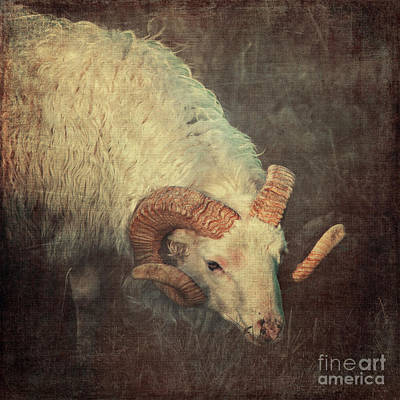 Aries  Poster by Angela Doelling AD DESIGN Photo and PhotoArt