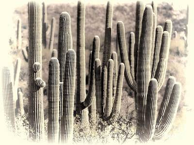 Arizona Dry Cactus Thicket Poster by Henry Kowalski