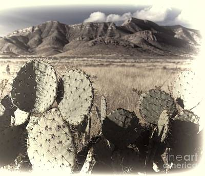 Arizona Dry Prickly Pear Poster by Henry Kowalski