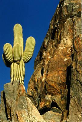 Arizona Sagauro Cactus Poster