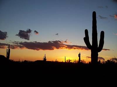Arizona Saguaro Cactus Sunset Poster by Michael J Bauer