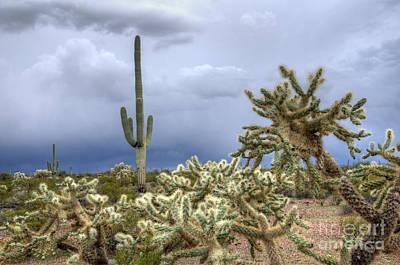 Arizona Sonora Desert Landscape 1 Poster by Bob Christopher