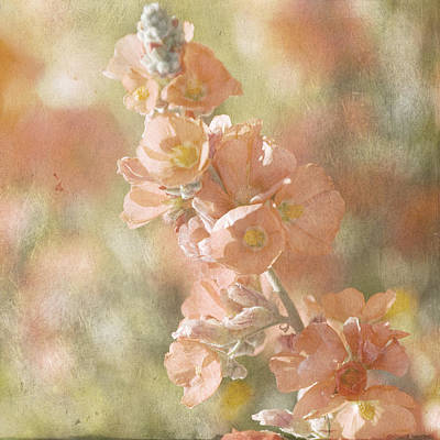 Arizona Wildflowers Copper Globemallow Poster by Renee Hong