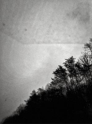Arkansas Trees Poster by H James Hoff