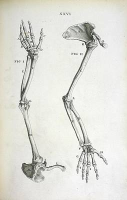 Arm Bones Poster by British Library