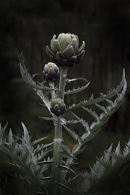 Poster featuring the photograph Artichoke by Jocelyn Friis