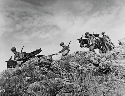 Artillerymen Use Army Mules To Carry Poster by Stocktrek Images