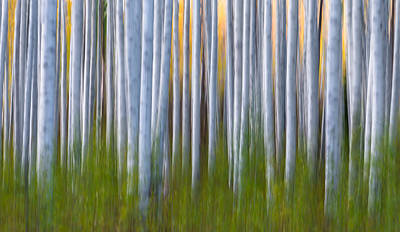 Artistic Aspens 2 Poster by Larry Marshall