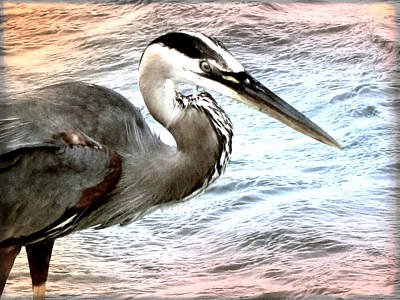 Artistic Great Blue Heron Poster