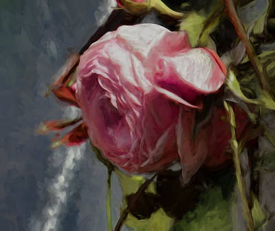 Artistic Painterly Pink Rose In Half Profile.2014 Poster by Leif Sohlman