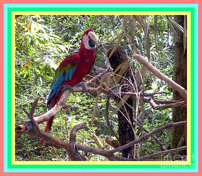Poster featuring the photograph Artistic Wild Hawaiian Parrot by Joseph Baril