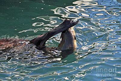 Artsy Sea Lion Poster