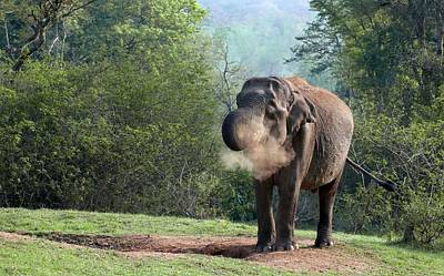 Asian Elephant At A Mineral Lick Poster