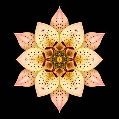 Asiatic Lily Flower Mandala Poster
