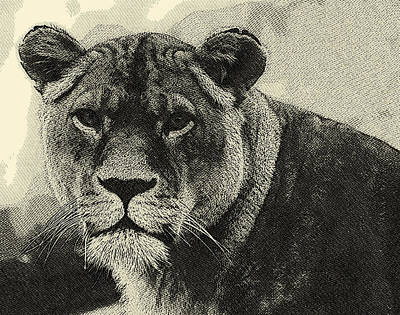 Aslan Hand Drawing Poster by MotionAge Designs