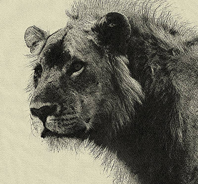Aslan The King  Hand Drawing Poster by MotionAge Designs