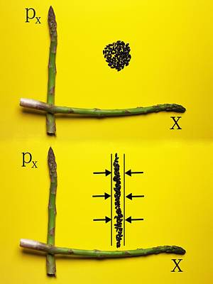 Poster featuring the photograph Asparagus And Black Rice Depicting Heisenberg Uncertainty Food Physics by Paul Ge