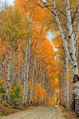 Aspen Alley 5 Poster by Ron Latimer