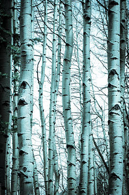 Aspen Blues Poster by Debbie Karnes