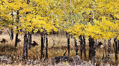 Poster featuring the photograph Aspen Grove Afternoon by Catherine Fenner