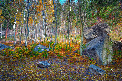 Poster featuring the photograph Aspen Grove by Jim Thompson