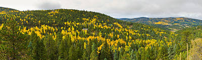 Aspen Hillside In Autumn, Sangre De Poster by Panoramic Images