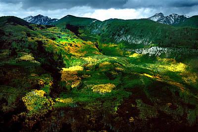 Aspen In Autumn Gold Poster