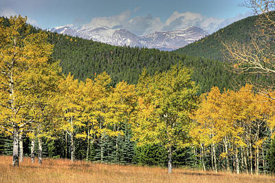 Aspen In Fall Mt Evans Poster