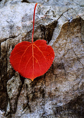 Aspen Leaf Fallen On Rock Poster by Vishwanath Bhat