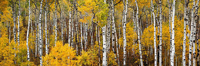 Aspen Pano Poster by Gary Peterson