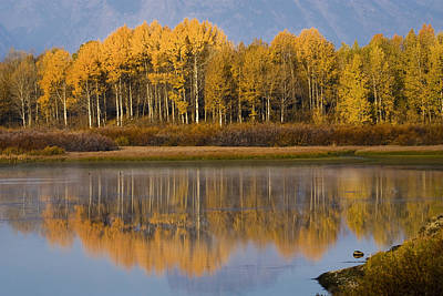 Poster featuring the photograph Aspen Reflection by Sonya Lang