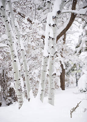 Aspen Snow Poster
